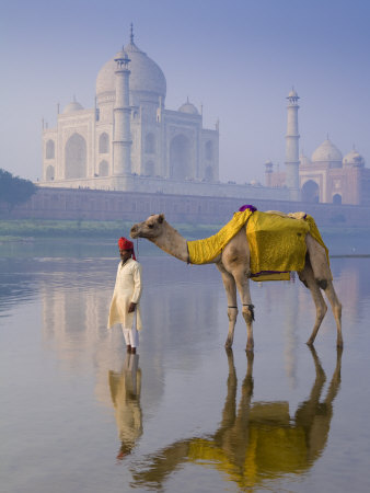 Camal and Driver, Taj Mahal, Agra, Uttar Pradesh, India Stretched Canvas Print