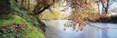 Trees Along a River, River Dart, Bickleigh, Mid Devon, Devon, England Stretched Canvas Print