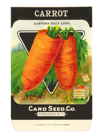 Carrot Seed Packet Stretched Canvas Print