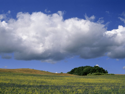 Cluster of Trees on a Hill under a Clear Blue Sky with Puffy Clouds Stretched Canvas Print