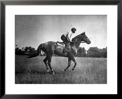 man of war horse. Race Horse Man O#39; War Framed