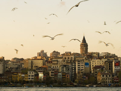 Seagulls Flock Above the Golden Horn, Istanbul, with the Galata Tower in the Background Stretched Canvas Print