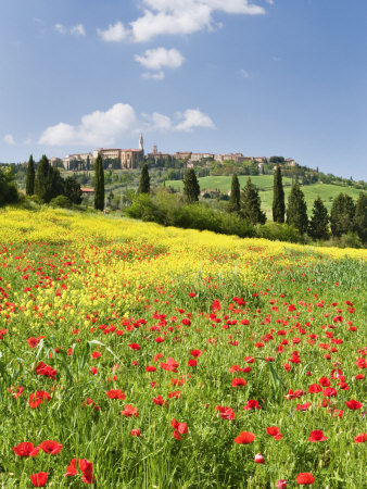 Hill Town Pienza and Field of Poppies, Tuscany, Italy Stretched Canvas Print