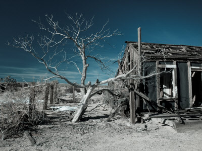 California, Cima, Mojave National Preserve, Abandoned Mojave Desert Ranch, Winter, USA Stretched Canvas Print