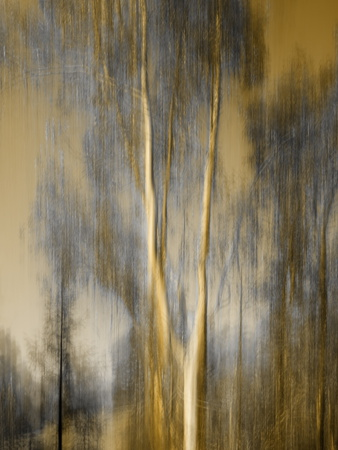 Composited Image of Trees Stretched Canvas Print