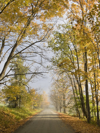 Rural Road in Autumn at Dawn, Vermont Stretched Canvas Print