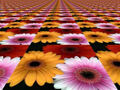 Gerbera Flowers Multiplied in Tiles Stretched Canvas Print
