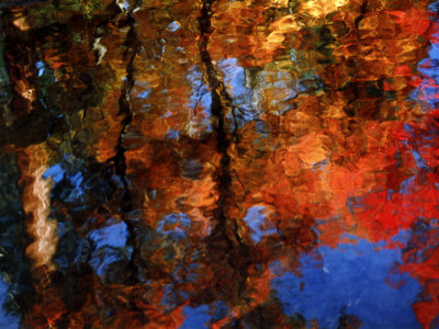 Reflection of Red Maples and Blue Sky in Creek, Sedona, Arizona, USA Stretched Canvas Print