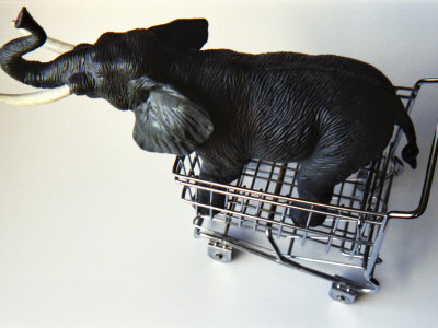 Toy Elephant in Toy Supermarket Cart Stretched Canvas Print
