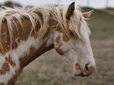 ♦Introduction♦ Melissa-farlow-wild-mustang-with-a-blue-eye-at-a-wild-horse-conservation-center