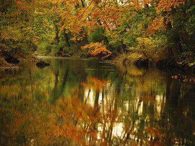 Trees in Fall Colors Reflected in Big Cove Creek Stretched Canvas Print