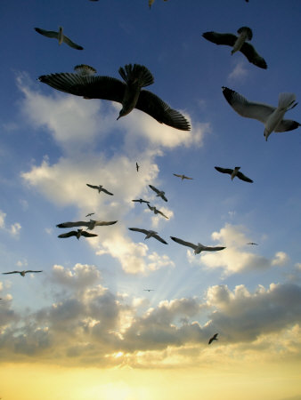 http://cache2.artprintimages.com/p/LRG/40/4047/CQ2LF00Z/art-print/outdoors-flock-of-birds-seagulls-beautiful-silhouette-at-beach-ocean-and-horizon-at-sunset.jpg