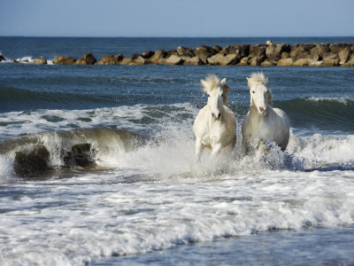 Horses+running+on+the+beach+pictures