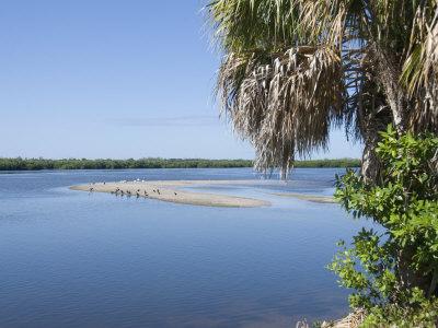 "J.N. ""Ding"" Darling Wildlife Reserve, Sanibel Island, Gulf Coast, Florida Stretched Canvas Print"