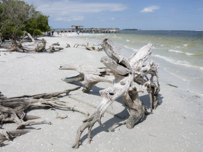 Driftwood on Beach with Fishing Pier in Background, Sanibel Island, Gulf Coast, Florida Stretched Canvas Print