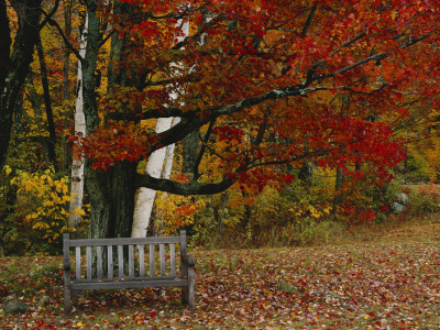 Empty Bench under Maple Tree, Twin Ponds Farm, West River Valley, Vermont, USA Stretched Canvas Print