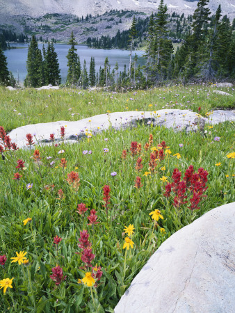 Boulders Amid Wildflowers, Ryder Lake, High Uintas Wilderness, Wasatch National Forest, Utah, USA Stretched Canvas Print
