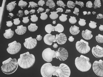 Shell Fair, Sanibel Island Stretched Canvas Print