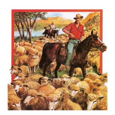 australian sheep farmer giclee