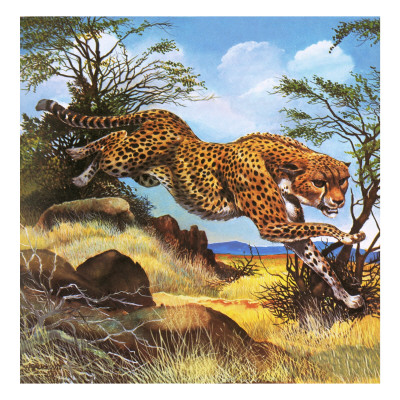 image tag cheetah running