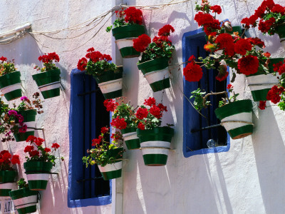 Green and White Plantpots Containing Red Geraniums Stretched Canvas Print