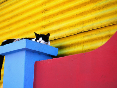 Cat Sleeping in Barrio La Boca Stretched Canvas Print