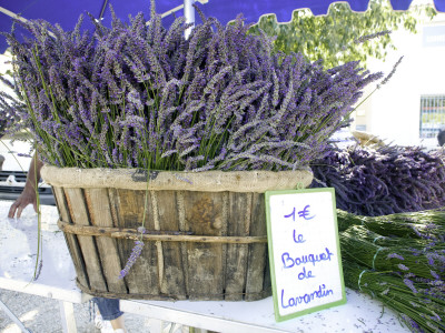 Lavender for Sale at 1 Euro a Bunch, at the Twice Weekly Famrer's Market in Coustellet Stretched Canvas Print
