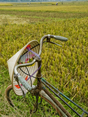 Bicycle and Coolie Hat in Ricefields on Outskirts of Hanoi Stretched Canvas Print