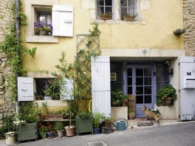 Village House in the Luberon Village of Goult, with Brown Dog Waiting at the Doo Stretched Canvas Print