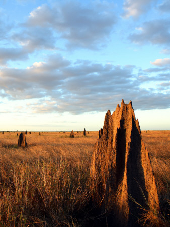 Termite Mounds on the Nifold Plain Stretched Canvas Print