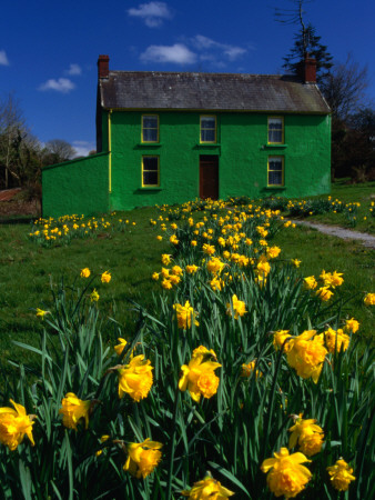 Brightly Painted Farmhouse with Yellow Daffodils Growing in the Garden, Crookstown, County Cor Stretched Canvas Print