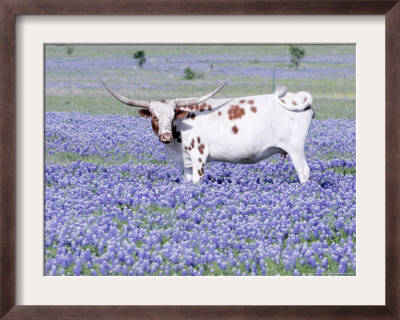 bluebonnet clip art. luebonnets in texas