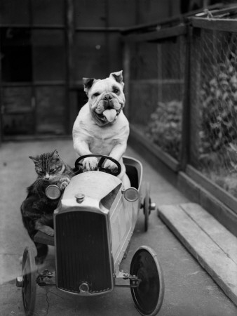 Dog and Cat Car Stretched Canvas Print