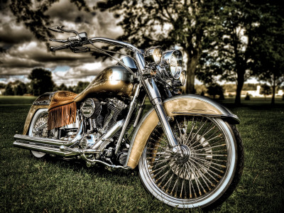 Harley Stretched Canvas Print