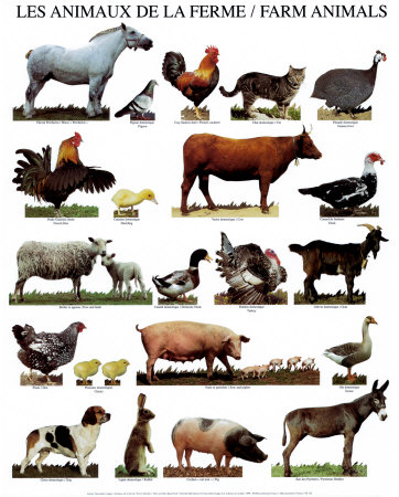animal farm all animals are Animal farm by george orwell searchable etext discuss with other readers.