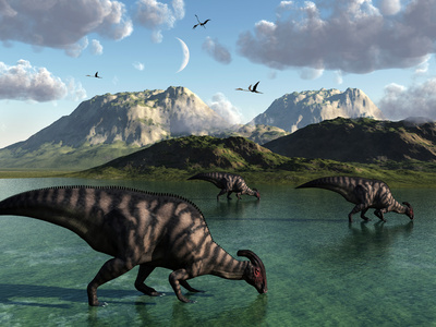 A Group of Parasaurolophus Dinosaurs Feed from a Freshwater Lake Stretched Canvas Print