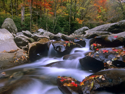 Little Pigeon River Among Rocks and Maple Leaves, Great Smoky Mountains Nat'l Park, Tennessee Stretched Canvas Print