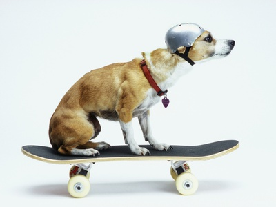 Dog with Helmet Skateboarding Stretched Canvas Print