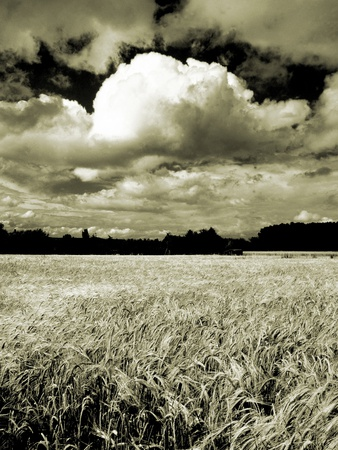 Field Under Cloudy Sky Stretched Canvas Print