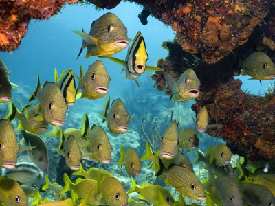 Schooling Fish Under Coral Ledge Stretched Canvas Print