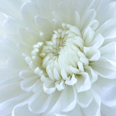 Close-up of White Flower Stretched Canvas Print