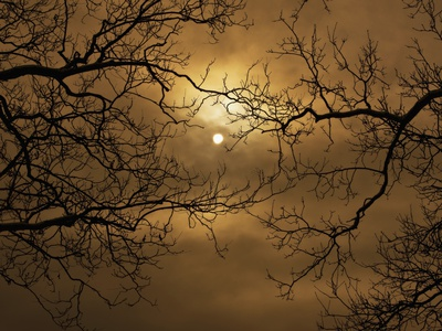 Branches Surrounding Harvest Moon Stretched Canvas Print