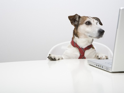 Dog in Front of Laptop at Desk Stretched Canvas Print
