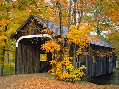 Covered Bridge and Maple Trees Stretched Canvas Print