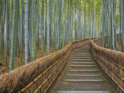 Bamboo Lined Path at Adashino Nembutsu-ji Temple Stretched Canvas Print