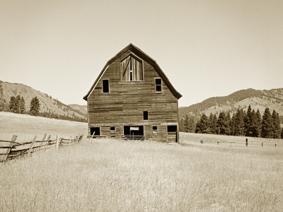 Barn in a Golden Field Stretched Canvas Print