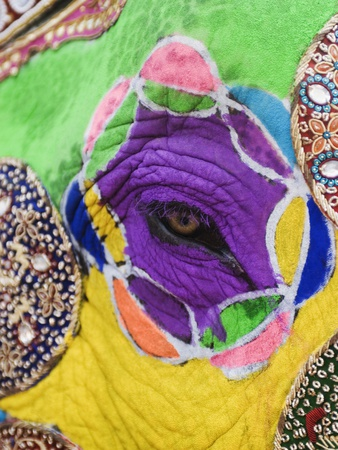 Close-up of a Painted Elephant, Elephant Festival, Jaipur, Rajasthan, India Stretched Canvas Print