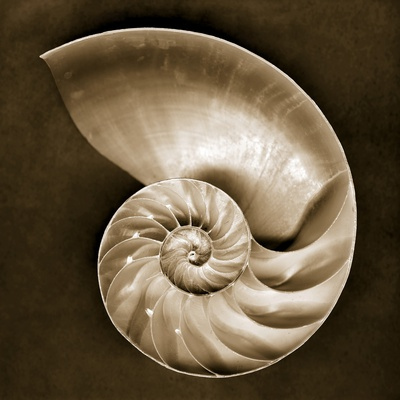Half Nautilus Stretched Canvas Print