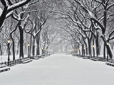 Central Park in Winter Stretched Canvas Print