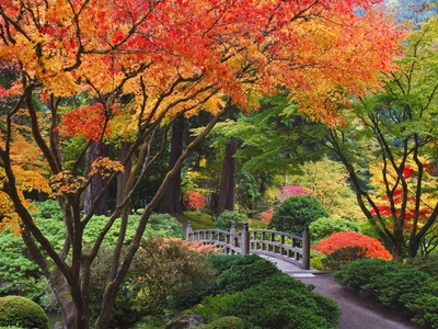 Fall colors at Portland Japanese Gardens, Portland Oregon Stretched Canvas Print